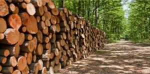 Forestry Contractors Insurance